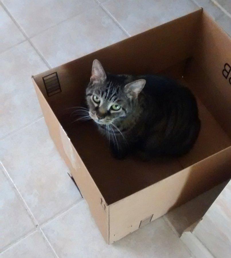 Bart 2015-06 in box.jpg