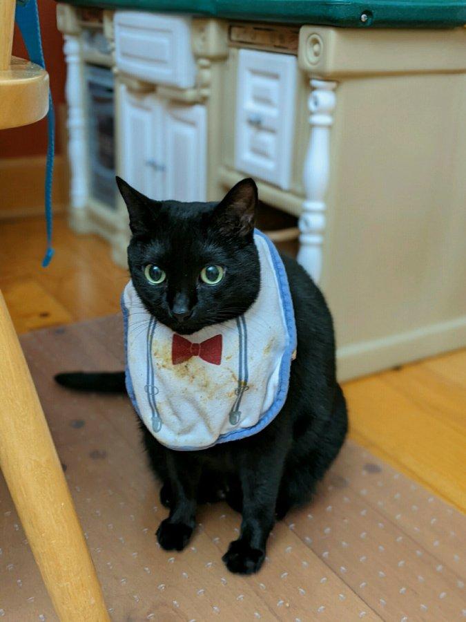 Bib worthy cat.jpg